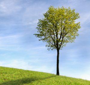 Dárek k narození miminka - strom
