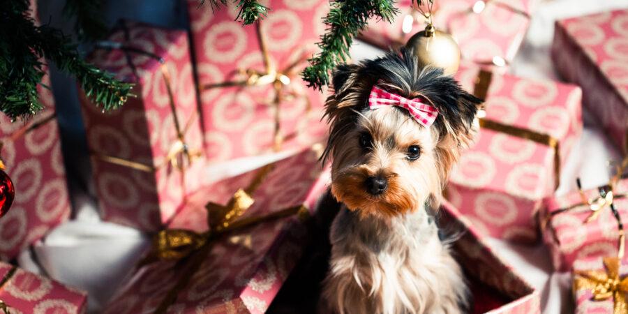 I dárky pro psy existují.